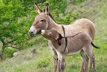 Donkeys and a Mule or two / by Elizabeth Astin
