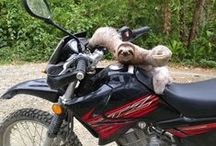 sloth on a motorcycle / Sloth from Quepos Costa Rica, rescued while crossing the road and placed on a motorcycle. What occurred after that was very funny.