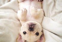 puppy / by Anne Martin