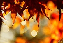 Seasonal - {Thanks} for Autumn / Giving Thanks for All things Fall. / by Melissa Willman