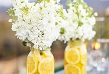 Seasonal Decorations - {Spring} / To Celebrate Life as it Begins Again in the Spring. :) / by Melissa Willman