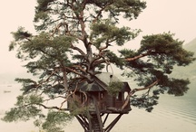 A House in a {Tree} / by Melissa Willman