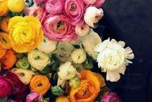 G A R D E N I N G / FLOWERS, GARDEN DESIGN & OUTDOOR SPACES
