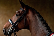 Horses / by Sarah Bruml