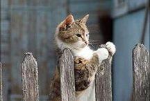 Purrrrfect cats