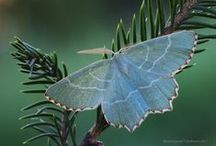 butterflies and insects / by Donna Lewis