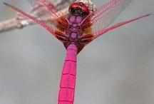 Flies....Butterflies n Dragonflies