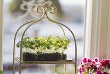 Gardening/outdoor / by Rachel Stevens