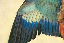 Alas / Todas alas alas del mundo