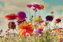 The Secret Garden / by Author Jamie Cirillo