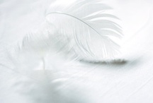 Wickedly White / by Steph Devlin