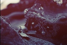 my photographs.