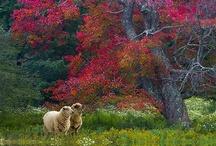 Trees - Leaves