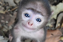 Cute Smiles / by Dolores Rafferty
