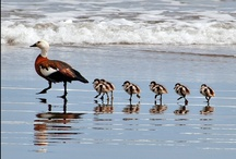 Moms & Babies / by Dolores Rafferty
