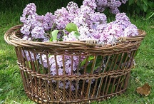 Baskets / by Holly Louen