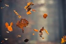 That's why I love autumn ☂