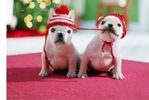 Cuteness / by Donna Caldwell