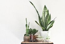 Outside In / Ideas and inspiration for how to bring plants and flowers inside your home.