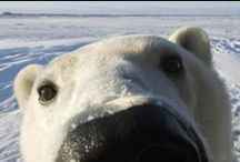 Arctic Wonders / Frozen, furry and fun / by discoveryplace