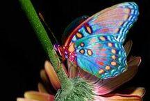 Butterflies, etc. / by Stony Hill Farm Greenhouses, LLC