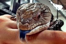 Our Critters / Our resident creatures / by discoveryplace