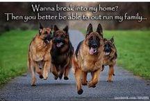 Dogs - German Shepherds!!!!! / by Stony Hill Farm Greenhouses, LLC