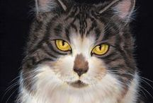 arty - Cats / by Stony Hill Farm Greenhouses, LLC
