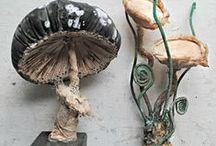 Mushrooms, mushrooms!