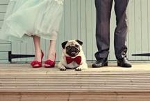 {Wedding pets}