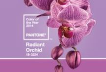 {Color of the Year 2014 - Radiant Orchid} / {Color of the Year 2014 by Wedme.cz} GO ON ------>http://www.wedme.cz/magazin/barevnosti-2/pantone-color-of-the-year-2014-radiant-orchid/1453