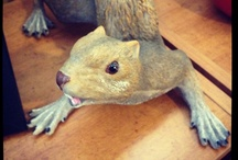 The Angry Squirrel