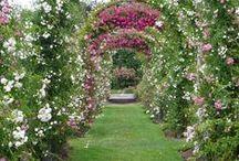 Garden Delight / by Carolyn Race