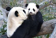 Baby animals - Un-bear-ably cute / by Ryn Tomas