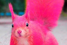 The Pink Squirrel