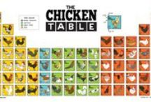 The Chicken Table