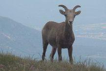 Taos, NM Wildlife / New Mexico wildlife nature
