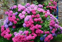 Flores / Flores, jardines / by M. Ignacia Guzman