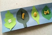 Classroom theme - Life Cycles and Mini Beasts / Innovative ideas for learning about lifecycles