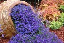 Flowers, Gardens, & other Beautiful Ideas. / by Lori Ledbetter