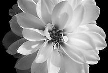 Black & White! / by Denise Mangrum