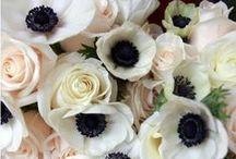 // Flowers / by Lauren Swett