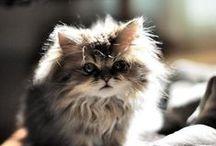 // My {Future} Cat  / by Lauren Swett