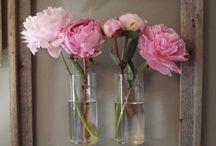 Blooms / by Teresa Livingston