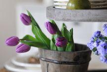 Tulips / by Teresa Livingston