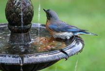 For The Birds / by Teresa Livingston