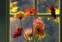 Gardens, Flowers, Plants... / by Anita Ferris