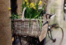 Bicycle Love / by Teresa Livingston