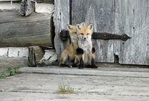 How cute can it get? / by Denise van Keulen
