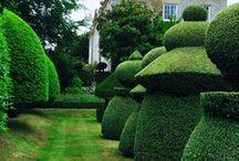 Garden + Courtyard